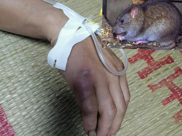 Chuột cắn là điềm báo gì